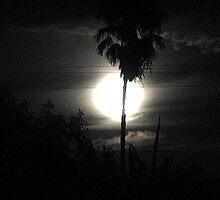 Night by FOTOX