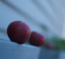 Apples in Perspective by Austin Walsh