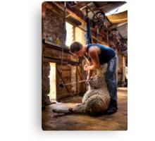 The Shearer Canvas Print