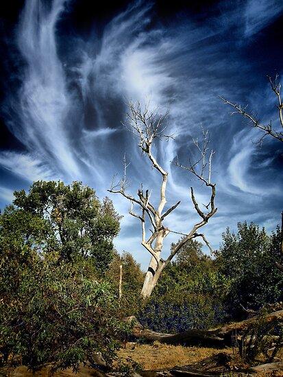 Windswept Skies by Barbara  Brown