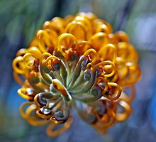 Grevillea - Australian Native by Colin Leal