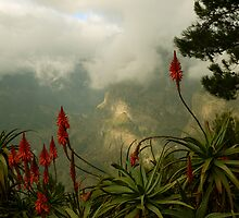 mountain aloes by dannybeath