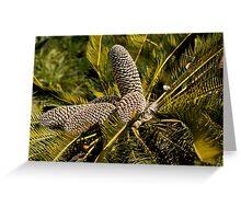 Drakensberg Cycad Cones, Encephalartos ghellinckii Greeting Card