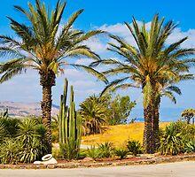 Israel kinneret 2008 by oleg1981