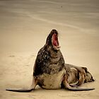 Angry Sea Lion - Surat Bay, New Zealand by Trishy