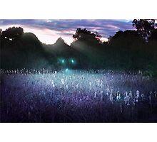 Wisplight - Reeds Photographic Print