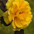 Golden Rose. by Bette Devine