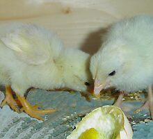 Two Chicks by MaeBelle