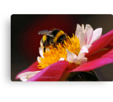 Bumble-Bee in the Spotlight Canvas Print