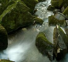 Down Stream by David Clewer
