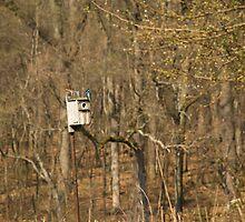 Birdhouse  by Jamie Kirschner