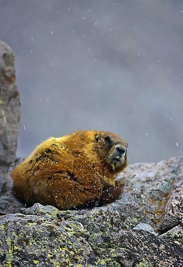 Grumpy by Mundy Hackett