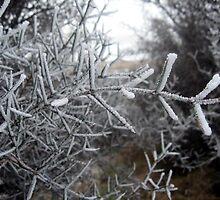 Ice Art by Cheryl Parkes