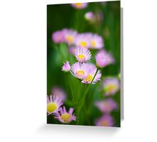 Fleabane Wildflowers Greeting Card