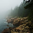 Fog on a Rocky Shore, Acadia National Park, Maine by MarkEmmerson