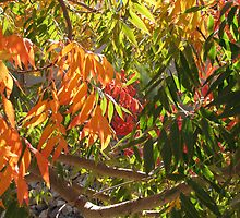 Fall Has Come to Arizona by Jeralynn