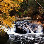Woodland waterfall by dbschanck