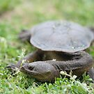 Long Neck Turtle by Sekans