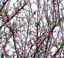 Signs of Spring by NicholeB
