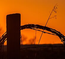 barbed wire fence by Michelle Danker