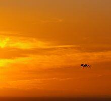 Sunset Hunt by Rosie Appleton
