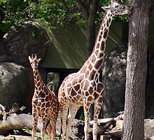 GIRAFFES - MOM AND BABY by mlynnd
