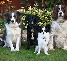 Meet the pack. by fionajean