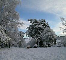 Snowy garden by alexcoles