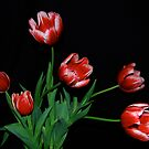 Family of Tulips by Pamela Hubbard