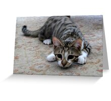 Monty the lively Cat  Greeting Card