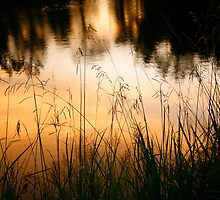 Grasses at Willow Pond by MaupinPhoto