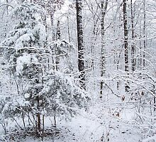 Snowy Forest Wonderland by NatureGreeting Cards ©ccwri