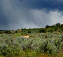 Desert Storm by Julie Beitzel