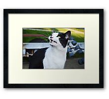 Onion Yawning  Framed Print