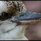 Kookaburra by Rod Noendeng