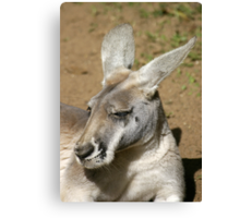Kangaroo Portrait Canvas Print
