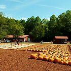 The Pumpkin Patch by Scott Mitchell