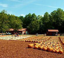 The Pumpkin Patch by Scott Mitchell