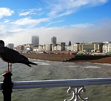 "UK: ""Brighton Seagull"", Brighton & Hove by Kelly Sutherland"
