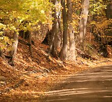 GOLDEN ROAD by robertpearson
