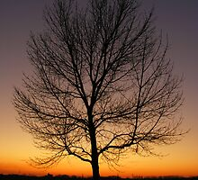Stop and watch the sunsets by LizzieMorrison