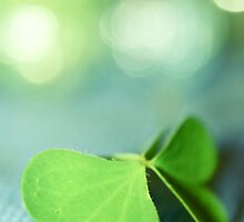 green butterfly by Aimelle