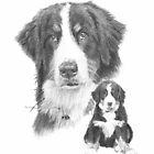 Bernese mountain dog adult and puppy by Mike Theuer