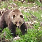 Boo the Grizzly Bear by Magnum1975