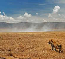 Ngorongoro Crater by Courtney Goddard