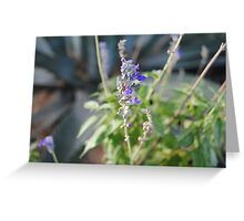 Silent friends Greeting Card