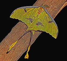 Painted Luna Moth by Judy Vincent