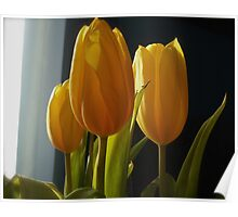Yellow Tulips in the Winter Poster
