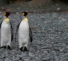 Penguin Duo 3 by squires