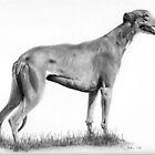 Greyhound by Karen Townsend